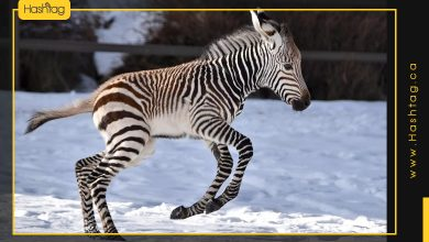 Photo of This Baby Zebra Captured The Hearts Of Its Viewers
