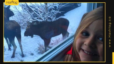 Photo of Look At How This Little Girl Reacted When She Saw Moose Outside Her Window